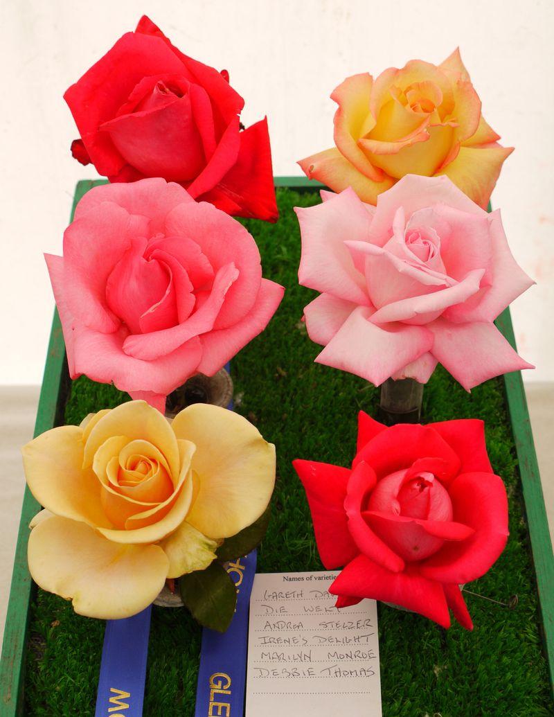 Rose-heads