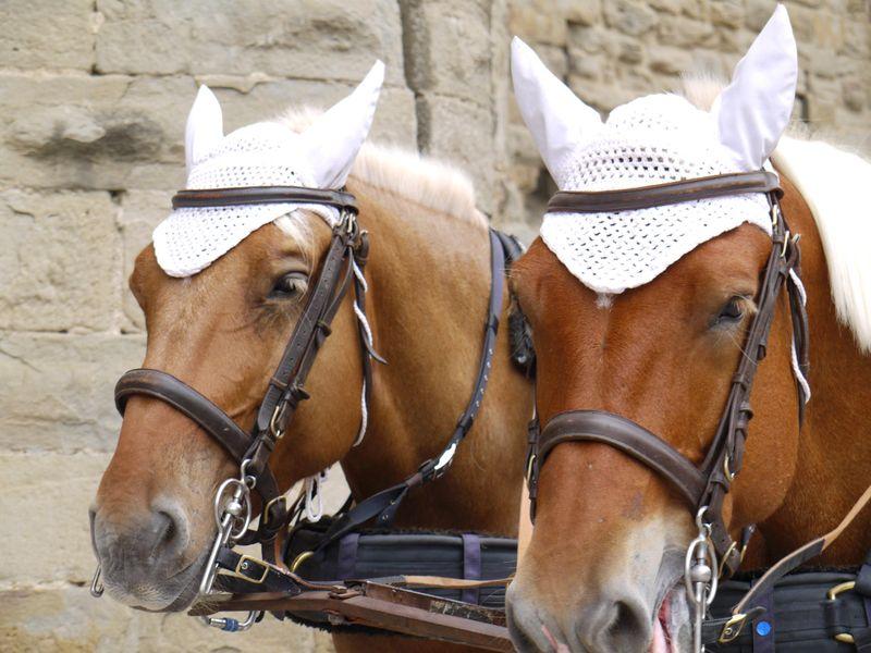 Carc-horses-hats
