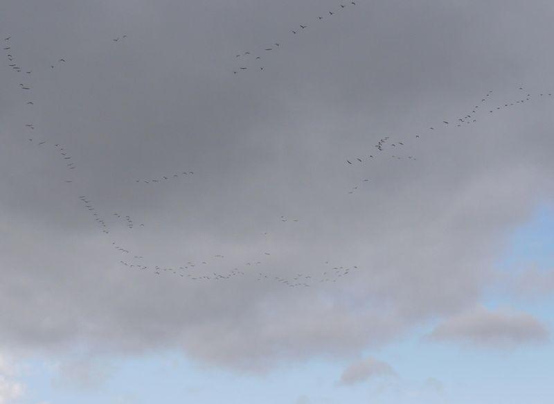 Sky-birds-fp-3