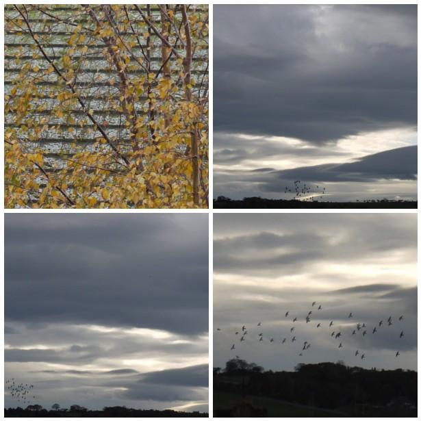 Mosaic BIRDS 2