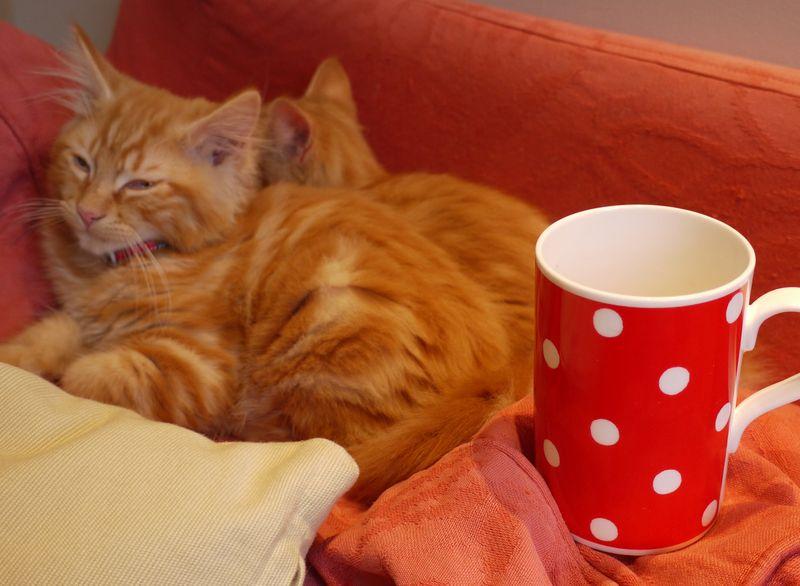 Cats-w-mug