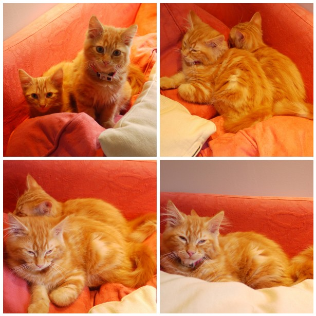 Mosaic kittens