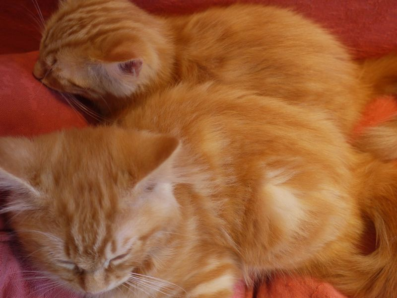 Tigger-and-bertie