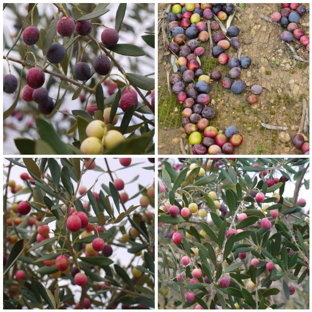Mosaic olives