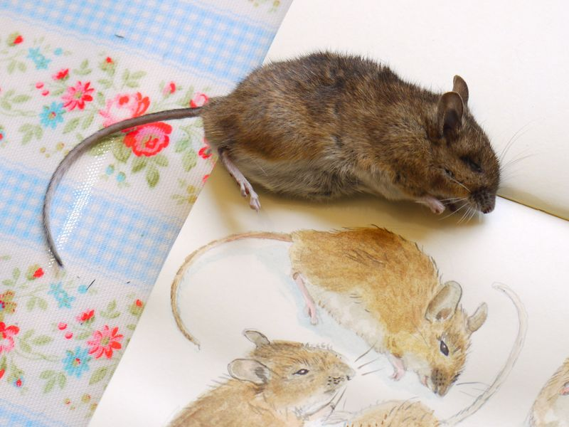 Mouse-on-book