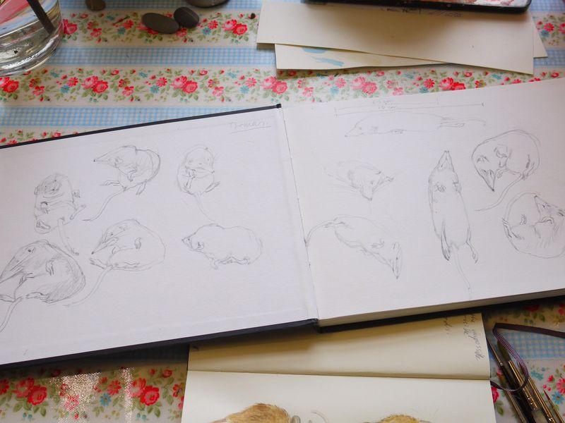 Shrew-sketchbook