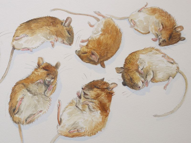 Mouse-painitng