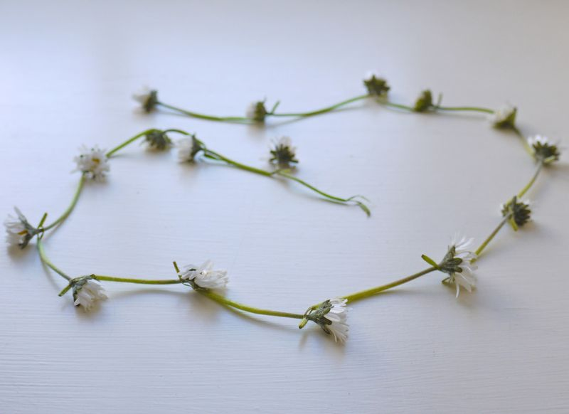 Daisy-chain,-fresh