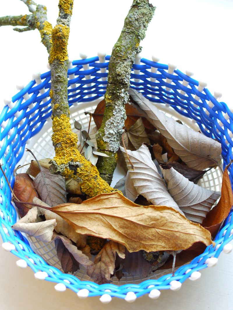 Leaves-in-basket-fp