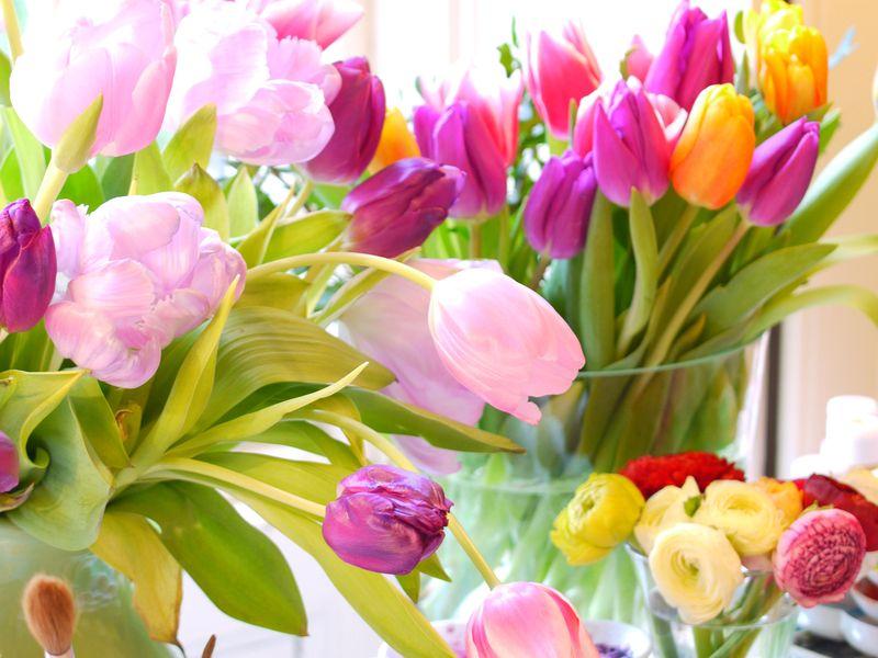 Tulips-fp