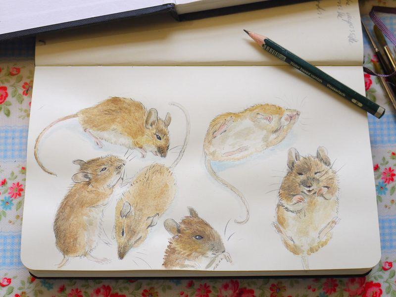 Sketchbook.-pencil-mouse