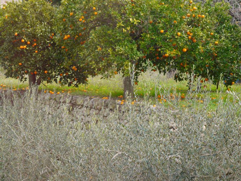 Orange,-olives