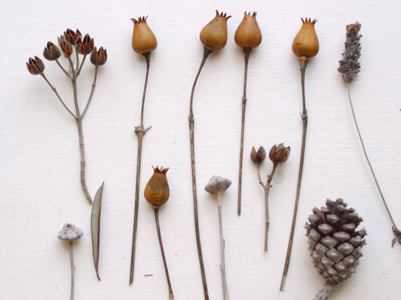 Seed-heads-fp